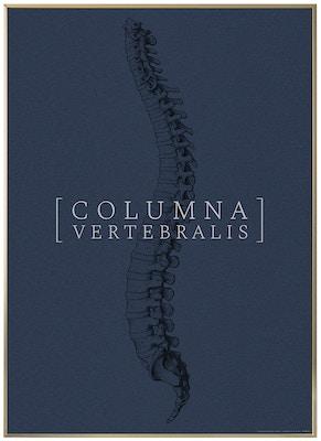 Anatomisk kunstplakat CLASSIC22