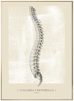 Anatomisk kunstplakat CLASSIC5T