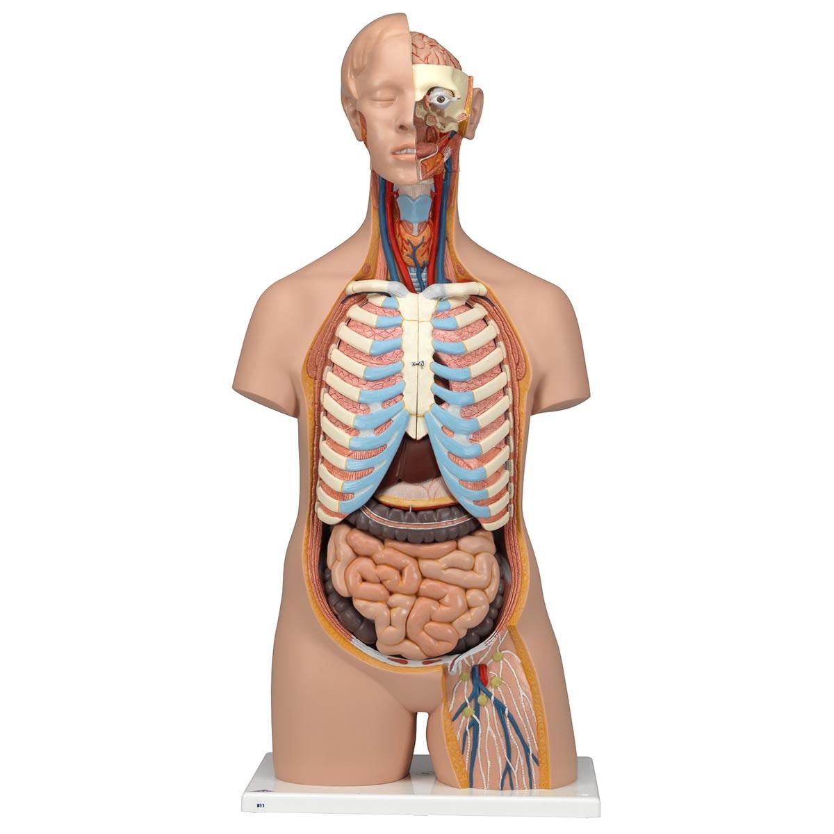 Unisex torso med 16 dele