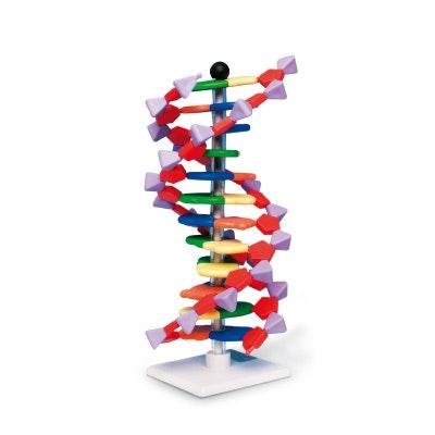 Forenklet og pædagogisk DNA samlesæt