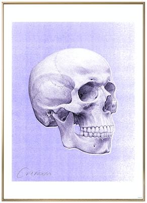 Anatomisk kunstplakat POP3