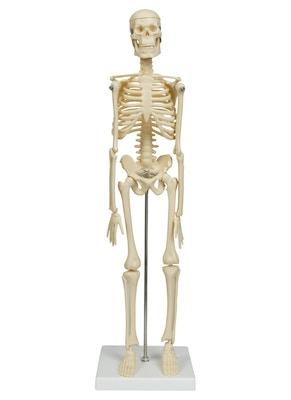 Formindsket og forsimplet skeletmodel
