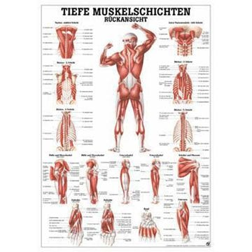 Dybe muskler dorsalt lamineret plakat med sorte metallister tysk latin