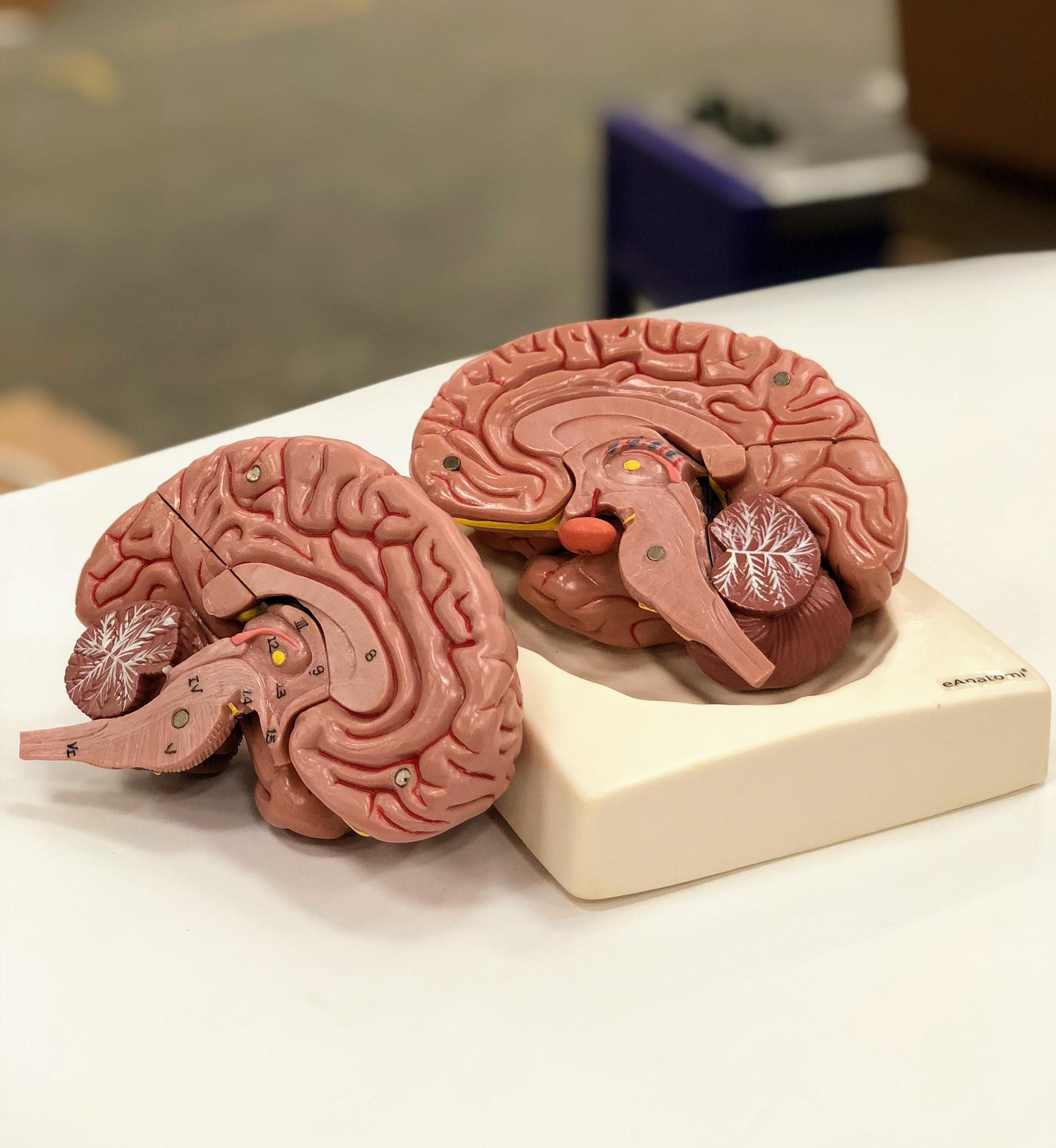 Hjernemodel i 8 dele