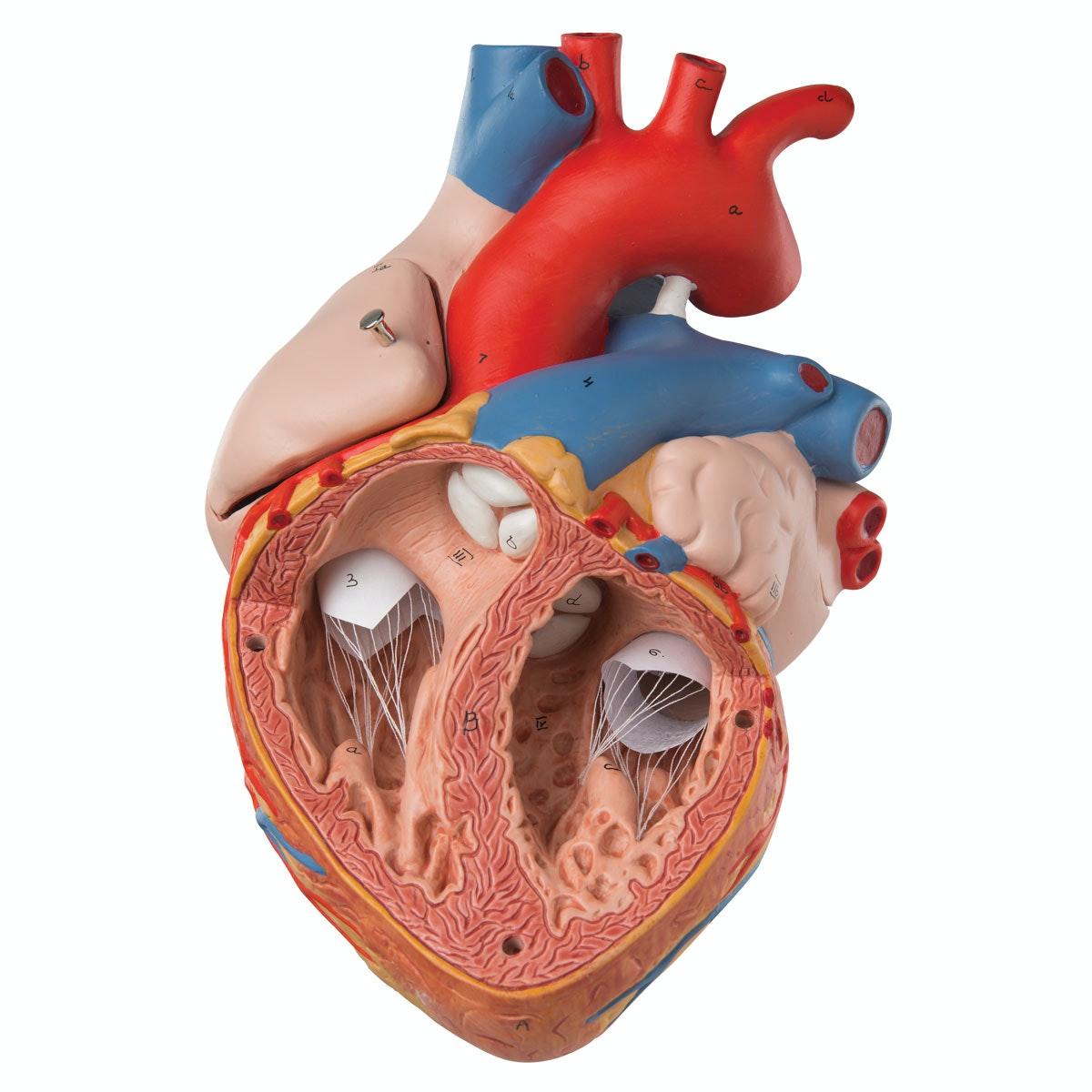 Håndmalet hjertemodel - FORSTØRRET