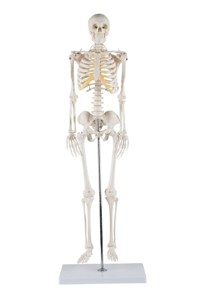 Mini skelet med meget bevægelige skulderled og hofteled