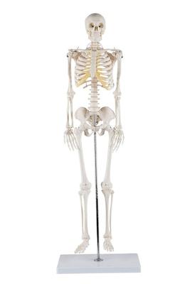 Miniskjelett med stor bevegelighet i skulderledd og hofteledd