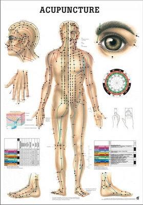 Kropsakupunktur lamineret engelsk med sorte metallister