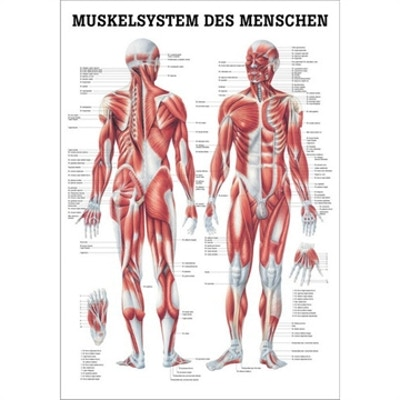 Papper tyska och latin 70x100 cm